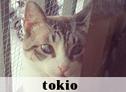Tokio, La Gatoteca, Cat Café