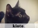 Kioto, La Gatoteca, Cat Café