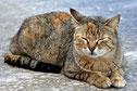 Foto einer dösenden Katze