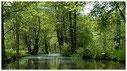 Plätze für eine Spreewald Kahnfahrt am Kleine Hafen buchen als Last Minute