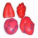 Human Organs Designs PU Antistress