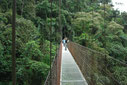 Combo Canopy & Arenal Hanging Bridges