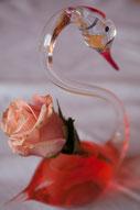 Rosen Hexenrosengarten