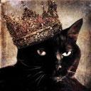 chaton noir angora yeux gris