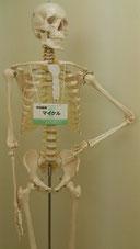 富士市接骨院 とみおか整骨院 各種保険 交通事故治療 むちうち 後遺症