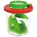 Boîte à insectes avec loupe pour visualiser les insectes.