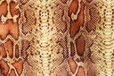 coloris : Python fauve