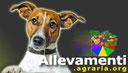 Cuccioli Golden Retriever Allevamento Centro Psicologia Canina