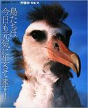 写真集『鳥たちは今日も元気に生きてます!』