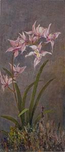 Nr. 2524 Orchideen