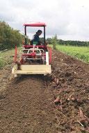 収穫の様子。機械が土を掘り起こすとその横に紅イモが排出される=12日、市内字石垣