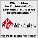 Pro Kromfohrländer Verein e. V.