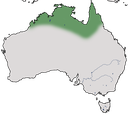 Karte zur Verbreitung des Weißscheitel-Lederkopfs in Australien