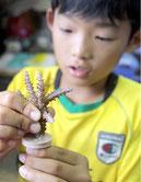 「美ら海自然観察会」と題した体験学習で養殖サンゴの苗作りをする参加者=16日午前、わくわくサンゴ石垣島センター
