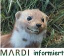 Marderfrei informiert !