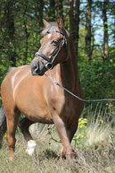 Miny de Welsh pony van Manege Gooi en Eemland in Bussum