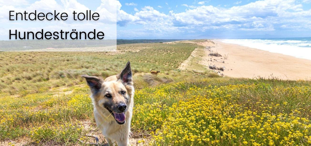 Camping mit Hund,  Wohnmobil Reiseführer, wohnmobil urlaub mit hund