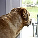 Plus d'empathie envers le chien qu'envers l'homme ?