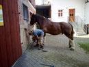 Pico takes off Ramon's horseshoes
