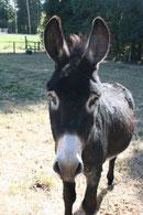 Frippon, l'âne