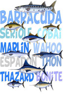 pêche aux poissons de mer