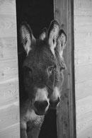 Contact - Renseignements et Réservations - les ânes