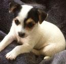 Marie - Ps adoptierte sie :)