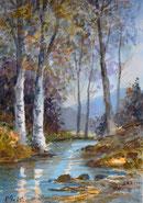 Birken am Wasser