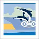 Delphin-Netzwerk
