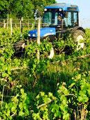 Tertres du Plantou, EARL certifiée agriculture biologique