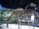 Bild eines Bactrosaurus