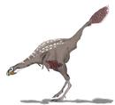 Bild eines Caudipteryx