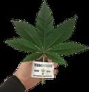 Buy Indica plants in Austria