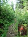 … folgte dem stramm ansteigenden Weg in den Wald hinauf.
