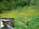 Am Ende des Talschlusses wurde das Gebiet etwas sumpfiger und von tausenden sonnig-gelben Sumpfdotterblumen übersät. Den Bachverlauf zierten solch eindrucksvolle Schneereste.