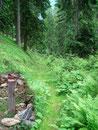Kurz nach dem markierten Pfahl bog mein Weg rechts in den Wald ab. Durch die begrünte Furche und in weiterer Folge über die Weideflächen …