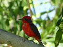 Auf der 600 ha (!) großen Hazienda von Rudolfo gibt es nicht nur Ochsen sondern auch schöne Vögel...