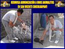 Sanaciones a animales en la semana!
