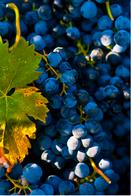 Vini Badalucco | Dos Tierras