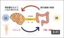 脳腸相関とは