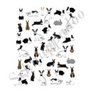 Kleine Katzen gehen