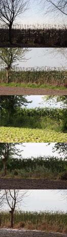 fruitboompjes van week tot week 40 x 140 cm
