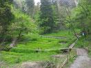 【サンショウウオが生息する湿地】