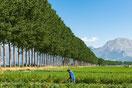 Abruzzo-Piana del Fucino