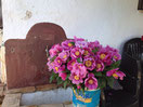 ¡el mejor ramo de elcolordelagerbera!: ramo de peonías salvajes, venidas especialmente desde Córdoba, para un cumpleaños muy especial