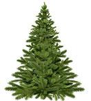 Weihnachtsbaumverkauf beim Blumen Grünschnabel