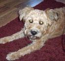 Klein-Terika, hat ihr Zuhause gefunden mit Hundekumpels!