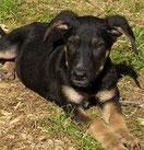 Andeo fand sein Zuhause auf einem Reiterhof und mit Hundekumpel