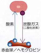 炭酸パックのポーア効果
