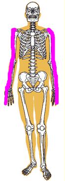 肩反射区 対応部分